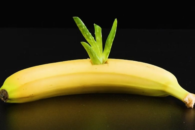 Aloe Vera banane